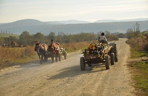 1.1415045825.pferd-meets-traktor