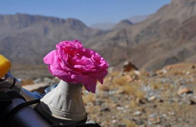 1.1429359884.geschenkte-rose