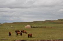 1.1438695419.pferde-und-yurten-in-kirgisistan