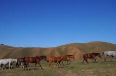 1.1442759857.pferde