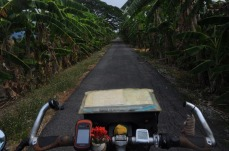 1.1461865680.durch-bananenplantagen