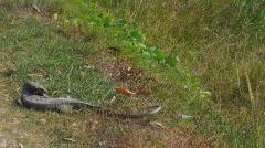 1.1461865680.ein-reptil