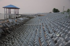 1.1461865680.frueher-waren-hier-mangrovenwaelder