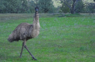 1.1470046262.ein-emu