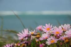 1.1476458199.flowers