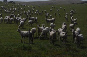 1.1476458199.sheep