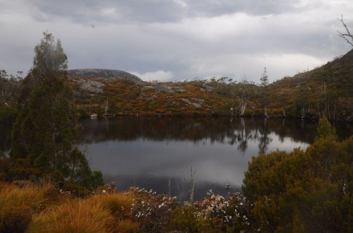 1.1480832592.1-cradle-mountain-np