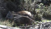 1.1480832592.1-wombat