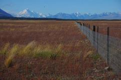 1.1484431537.fences