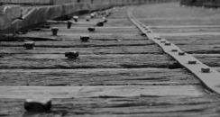 1.1484431537.otago-rail-trail