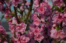 1.1492326859.blossom