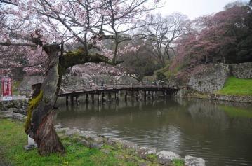 1.1492326859.cherry-blossom