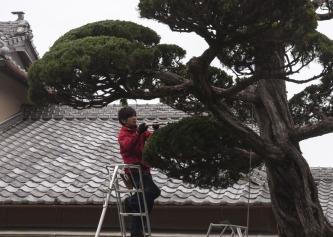 1.1492326859.cutting-trees