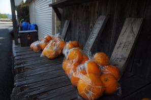 1.1492326859.selling-oranges