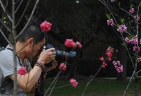 1.1492326859.taking-pictures-of-cherry-blossom