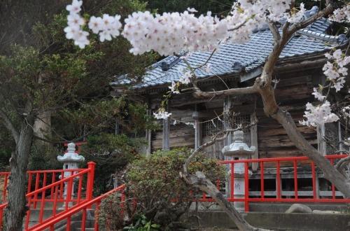 1.1494672403.1-cherry-blossom
