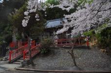 1.1494672403.cherry-blossom